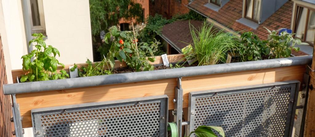 Der Kasten in seiner ganzen Länge. Die Pflanzen scheinen ihr neues Zuhause gut anzunehmen :)