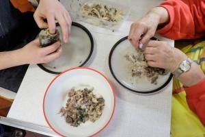 Die Köpfe werden komplett zerlegt und die Weichteile abgepult.